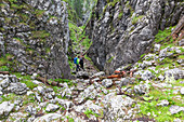 ' Hikers in ''Notgasse'', gorge in the Dachstein area, Styria, Austria, Europe'