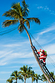 Santa Claus climbing a palm tree with a ladder, Captiva, Florida, USA