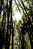 Silhouette der dichten Pflanzenwelt im Gegenlicht in einem Nationalpark, Fort Myers, Florida, USA