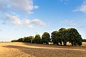 landscape, harvested fields near Klein Thurow, Biosphere Reserve Schaalsee, Mecklenburg lake district, Klein Thurow, Mecklenburg-West Pomerania, Germany, Europe