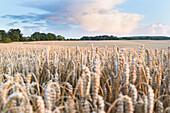 landscape, fields near Klein Thurow, Biosphere Reserve Schaalsee, Mecklenburg lake district, Klein Thurow, Mecklenburg-West Pomerania, Germany, Europe