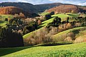 landscape, Ried, Black Forest, Germany