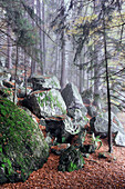 nature, Feldsee, Black Forest, Germany