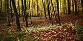 Wolfsschlucht, autmn forest, Black Forest, Germany