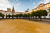 Patio de Banderas with orange trees, view to Giralda, bell tower of the cathedral, Seville, Andalucia, Spain, Europe