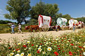 blooming meadow in Spring, caravan of ox carts, El Rocio, pilgrimage, Pentecost festivity, Huelva province, Sevilla province, Andalucia, Spain, Europe