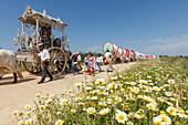 Blooming meadow in Spring, caravan of ox carts, Simpecado cart, El Rocio, pilgrimage, Pentecost festivity, Huelva province, Sevilla province, Andalucia, Spain, Europe