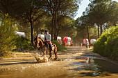 Horse rider crossing a large puddle, El Rocio, pilgrimage, Pentecost festivity, Huelva province, Sevilla province, Andalucia, Spain, Europe