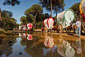 caravan of ox carts and water reflection, El Rocio, pilgrimage, Pentecost festivity, Huelva province, Sevilla province, Andalucia, Spain, Europe