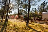 caravan of ox carts, El Rocio pilgrimage, Pentecost festivity, Huelva province, Sevilla province, Andalucia, Spain, Europe