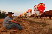 Boyero resting and caravan of ox carts, El Rocio pilgrimage, Pentecost festivity, Huelva province, Sevilla province, Andalucia, Spain, Europe