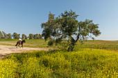 blooming meadow in spring, horse rider, El Rocio, pilgrimage, Pentecost festivity, Huelva province, Sevilla province, Andalucia, Spain, Europe