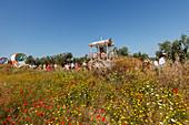blooming meadow in Spring, El Rocio, pilgrimage, Pentecost festivity, Huelva province, Sevilla province, Andalucia, Spain, Europe
