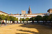 Patio de Banderas, orange trees with view to Giralda, bell tower of the cathedral, old town, Seville, Andalucia, Spain, Europe