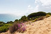 Parque Natural de la Brena, nature park near Los Canos de Meca near Vejer de la Frontera, Costa de la Luz, Atlantic Ocean, Cadiz province, Andalucia, Spain, Europe