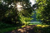 Morgenstimmung, Weg und Bäume im Morgenlicht, Sonnenstrahlen, Laubbäume, Deutschland