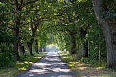 Alley, Mecklenburg Western Pomerania, Germany, Europe