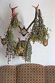 Herbs dry on deer heads, Ottobeuren, Lower Allgaeu, Allgaeu, Swabia, Bavaria, Germany