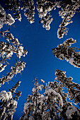 Low Angle View Of Snow Covered Trees Below Starry Sky