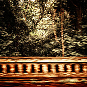 Bridge barrier and foliage with motion blur.