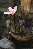 UBUD, INDONESIA-NOVEMBER 22: An Indonesian stone carving holds a fresh Frangipani flower (Plumeria alba) in the town of Ubud on Bali, Indonesia.