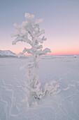 Sonnenaufgang im Nationalpark Abisko, Kiruna, Schweden, Europa