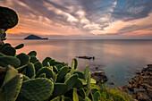 Island Gallinara, Alassio, province of Savona, Liguria, Italy, Europe
