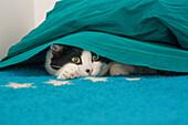 Eine Katze unter den Decken - Venetien - Italien