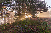 Europa, Südtirol, Bozen, Passo delle Erbe, Sonnenstrahlen filtern durch die Bäume in einem nebligen Morgen