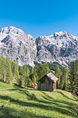 La Valle , Wengen, Alta Badia, Bolzano province, South Tyrol, Italy, Hikers traveling on the pastures of Pra de Rit