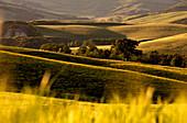 Europa, Italien, Detail in Orcia Tal bei Sonnenuntergang, Provinz Siena, Toskana