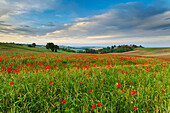 Monferrato hills, Alessandria province, Piedmont, Italy, Europe
