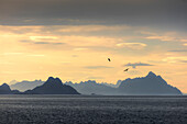 Birds fly in between sky illuminated by the midnight sun and clear sea Lofoten Islands Norway Europe
