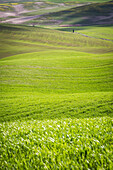 San Quirico d'Orcia countryside, Val d'Orcia, Tuscany, Italy