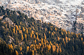 Colorful trees during autumn, Puez Odle Natural Park, South Tyrol, Italy