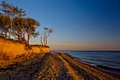 Bäume, Steilküste, Dovnsklint, Bagenkop, Ostsee, Langeland, Dänemark