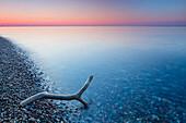 Driftwood on the beach, Bagenkop, Baltic Sea, Langeland, Denmark