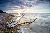 Driftwood on the beach, Stege, Isle of Moen, Denmark