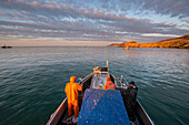 A commercial fishing crew and skipper haul in a load of herring in the morning in Kulukak Bay in the Bristol Bay region of Alaska, Southwest Alaska, USA