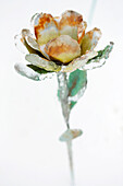 A metal flower encased in ice from an ice storm against a white background