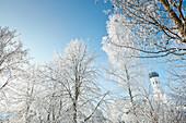 Wintermorgen, Kirchturm, Bäume, Münsing, Oberbayern, Bayern, Deutschland