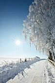 Schneebedeckte Strasse, Wintermorgen, Bäume , Münsing, Oberbayern, Bayern, Deutschland