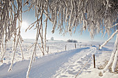 Schneebedeckte Strasse, Wintermorgen mit schneebedeckten Bäume, Münsing, Oberbayern, Bayern, Deutschland