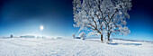 Winter morning in a winter landscape, Trees, Muensing, upper Bavaria, Bavaria, Germany
