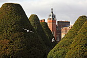 300 years old yew trees, Park und Palace, Hampton Court, Richmond upon Thames, Surrey, England