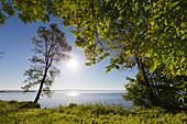 Morning mood at Mueritz lake, Mueritz-Elde-Wasserstrasse, Mecklenburgische Seenplatte, Mecklenburg-West Pomerania, Germany