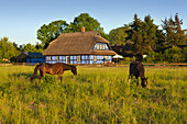 House with thatched roof, Warthe, Lieper Winkel, Usedom, Baltic Sea, Mecklenburg-West Pomerania, Germany
