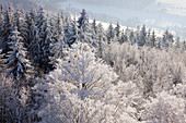 "View from Feldstein rock over snow-covered trees, rock formation ""Bruchhauser Steine"", near Olsberg, Rothaarsteig hiking trail, Rothaargebirge, Sauerland region, North Rhine-Westphalia, Germany"