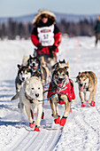 Musher Paul Gebhardt competing in the 45th Iditarod Sled Dog Race on the Chena River after leaving the restart in Fairbanks in Interior Alaska, USA