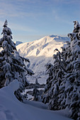Snow covered pine trees and mountain range in winter, Alaska, United States of America